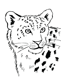 snow tiger coloring page baby snow leopard drawing at getdrawings com free for personal use