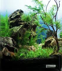 Aquarium Aquascapes 79 Best Aquarium Aquascapes U0026 Aquascaping Images On Pinterest