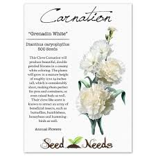 amazon com package of 500 seeds grenadin white carnation
