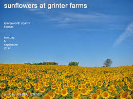 the world u0027s best photos of flowers and sunflowerfield flickr