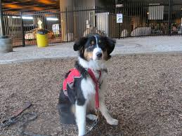 australian shepherd san diego 10 of the most dog friendly airports in the u s mnn mother