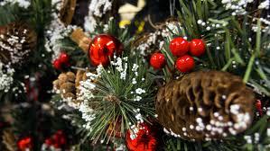 christmas tree images free christmas lights decoration
