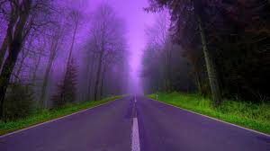 forests evening lilac trees dusk grass color nature beautiful