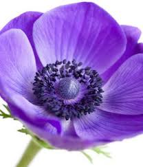 purple flower purple flower names enlisted with a beautiful photo gallery