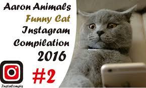 Cat Instagram Aaron Animlas Funny Cat Instagram Compilation 2016 Part 2 Youtube