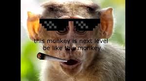 Monkey Meme - dank monkey memes gone wowed youtube