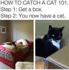 Funny Cat Meme - 18 funny cat memes to help get you through the day i can has