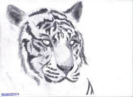 drawn animal pencil shading pencil and in color drawn animal