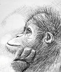 monkey sketch drawing by scarlett royal