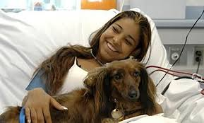 afghan hound therapy dog service animal training