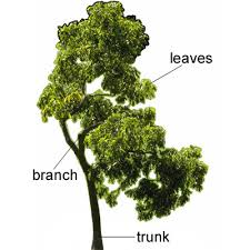 tree meaning of tree in longman dictionary of contemporary