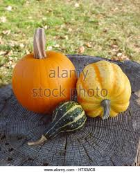 ornamental gourd stock photos ornamental gourd stock images alamy