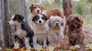 Types Of Dogs Cute Puppies Of Different Breeds Of Dogs In The Kennel Waiting