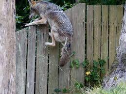 Texas wild animals images Mount pleasant tx official website wild animals jpg