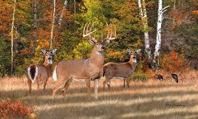 wildlife seeds for game plots