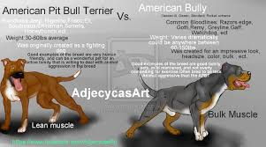 american pitbull terrier kennels usa what is the difference between american bully and american pit