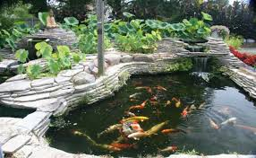 Backyard Fish Pond Kits by Koi Pond Kits With Waterfall House Exterior And Interior