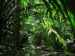 tropical rainforest native plants jungle wilderness scenery and wanderlust