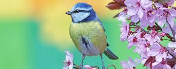 get into the garden how to encourage birds into your garden