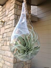 teardrop plant terrarium held by hanging succulent glass