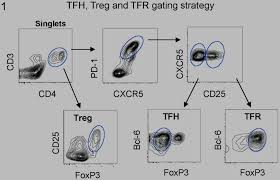 characterization of fl infiltrating t cells by flow cytometry