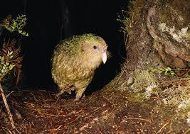 bo attracting predators to birds
