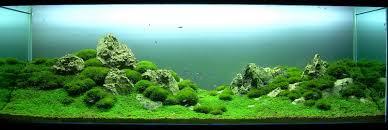 aquascaping styles aquariums planted aquarium and fish tanks