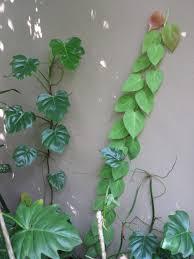 robert u0027s tropical paradise garden