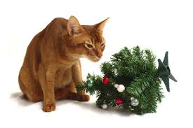 abyssinian cat and mini christmas tree stock 1 by furlined on