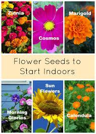 planting a garden starting seeds indoors eieihome