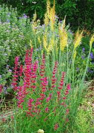 ornamental grasses and companion plants