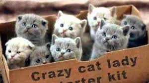 crazy cat lady starter kit youtube