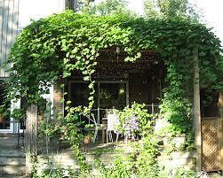 Plants For Pergolas by Pergola Design Ideas Vines For Pergolas Most Recommended Design