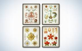 natural beauty style picsdecor com science decor that will actually look good in your house popular