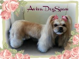 Dog Grooming Styles Haircuts Aviva Dogspaw Dog Grooming Coquitlam Dog Groomer U0027s Blog Coquitlam