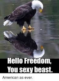 You Sexy Beast Meme - hello freedom you sexy beast american as ever hello meme on
