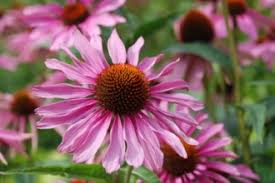 ornamental and nursery crops alternative farming systems