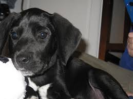 bluetick coonhound terrier mix shhh not while i u0027m reading in my mailbox 32