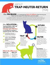 community cats u2013 licking county humane society