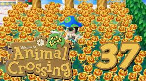Golden Roses Animal Crossing New Leaf Episode 37 Golden Roses Youtube