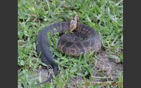 Snake In The Backyard by Vox Populi U0027as Long As You Keep Snakes In Your Backyard You