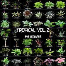 second marketplace tropical vol 2 345 tree flower plant