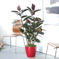 best indoor plants low light what are the best indoor plants low light houseplants low light