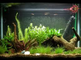 what are the best fish tank decorations for angelfish