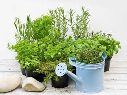 herbs indoors how to grow herbs indoors and outdoors food network healthy