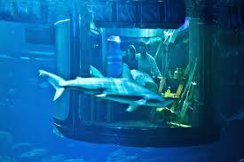 chambre aquarium ils ont dormi dans une chambre entourée de requins