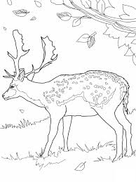 free printable deer coloring pages kids