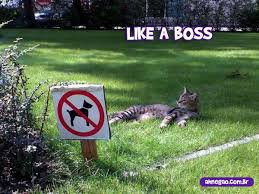 Like A Boss Meme - image like a boss 1 jpg teh meme wiki fandom powered by wikia