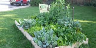 beginner vegetable garden