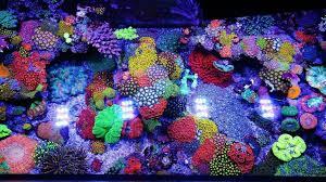 Floating Aquascape Reef2reef Saltwater And Reef Aquarium Forum - jourdy u0027s 90 gallon mixed reef aquariums and oceans pinterest